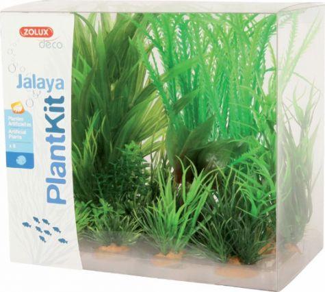 PLANTKIT JALAYA N°1