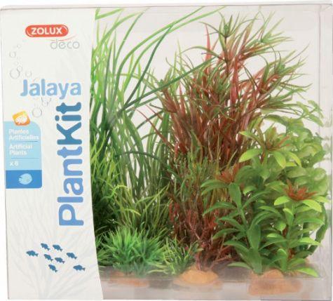 PLANTKIT JALAYA N°4